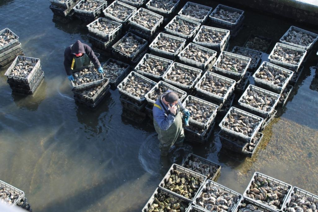 bolsmosselhandel-oestersputten
