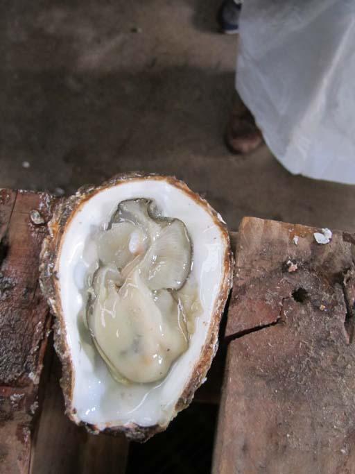 bolsmosselhandel-oesters openen