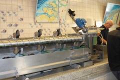 bolsmosselhandel-mosselveiling, sortering, kaliber