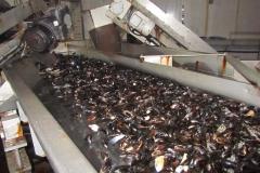 bolsmosselhandel-controle van de mosselen